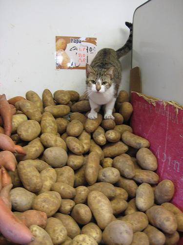 stupid human cat