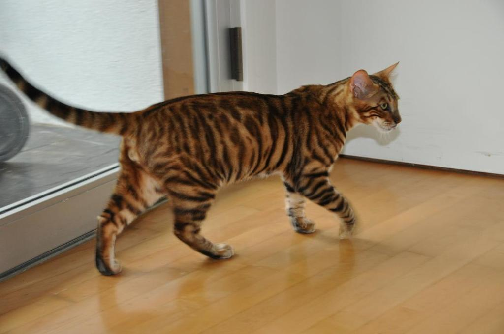 https://completeoutrageredux.files.wordpress.com/2011/07/toyger.jpg?w=1024