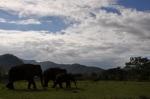 So long, elephants.