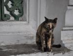 Temple kitty!