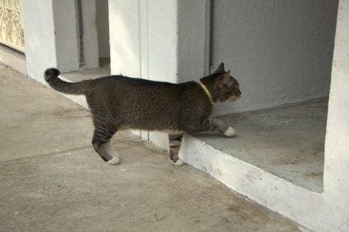 Important cat business