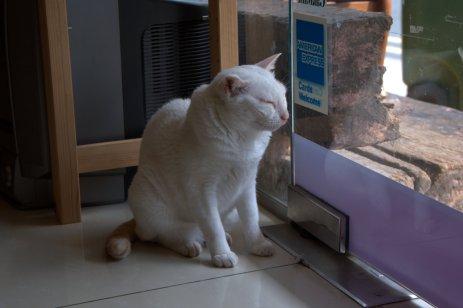 Bookstore kitteh
