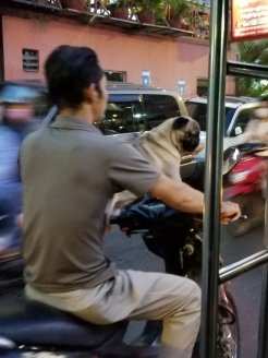 The best thing I saw from my tuk tuk